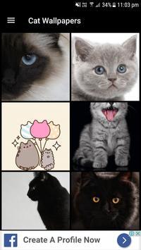 Cat Wallpapers (4K, Full HD) : Soft & Cute poster