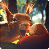 Love Squirrels and Acorn LWP icon