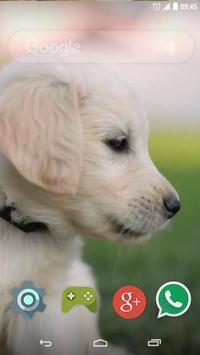Cute Labrador Puppies apk screenshot