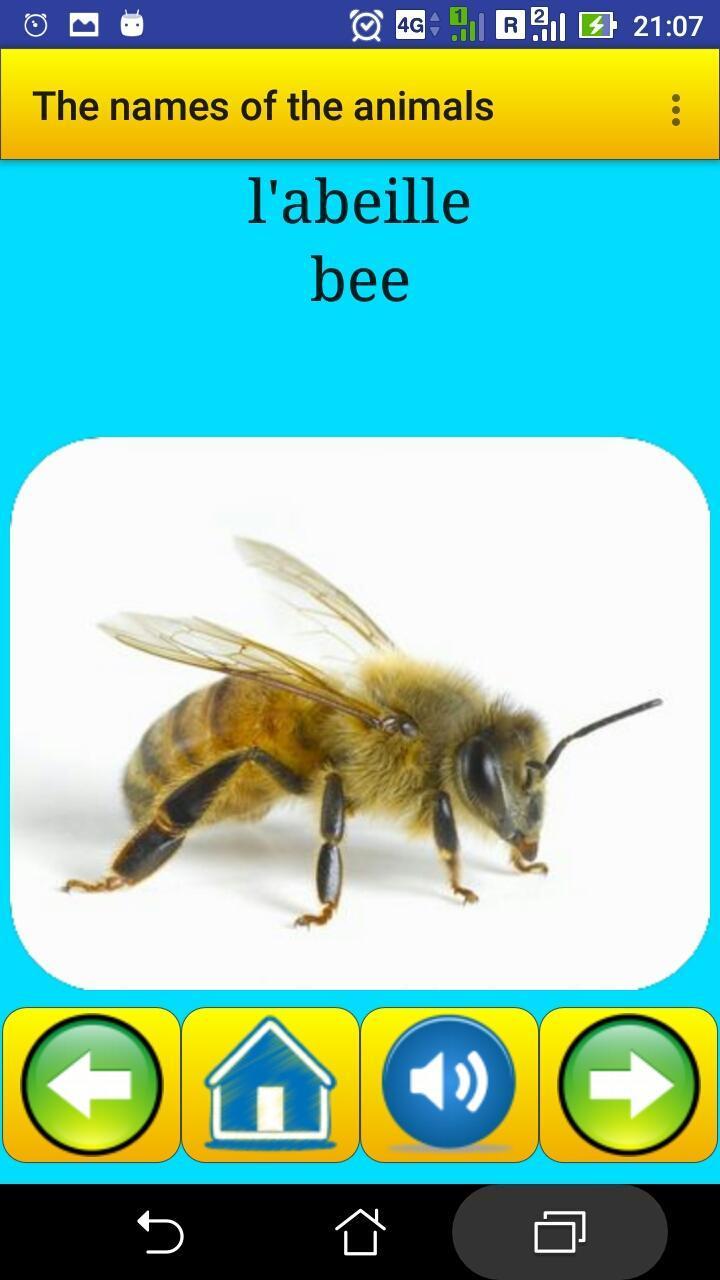 Learning French Language Animals Names