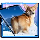 3D Rump Shaking Corgi Dog Theme&Live wallpaper APK