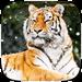 Cool Tiger Live wallpaper