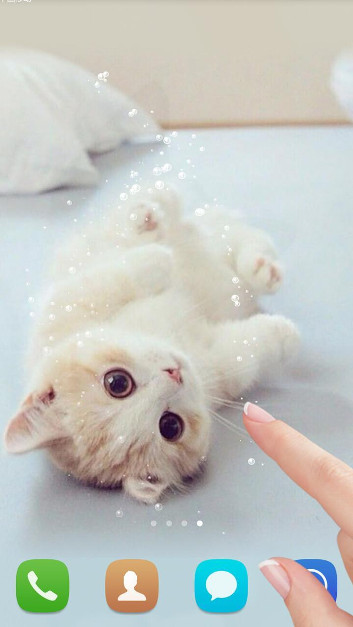 Lucu Kucing Hidup Wallpaper For Android APK Download