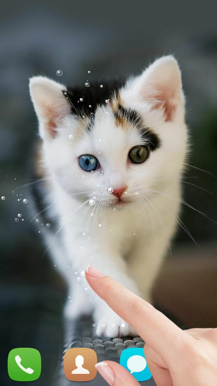 Cute Cat Live Wallpaper For Android APK Download