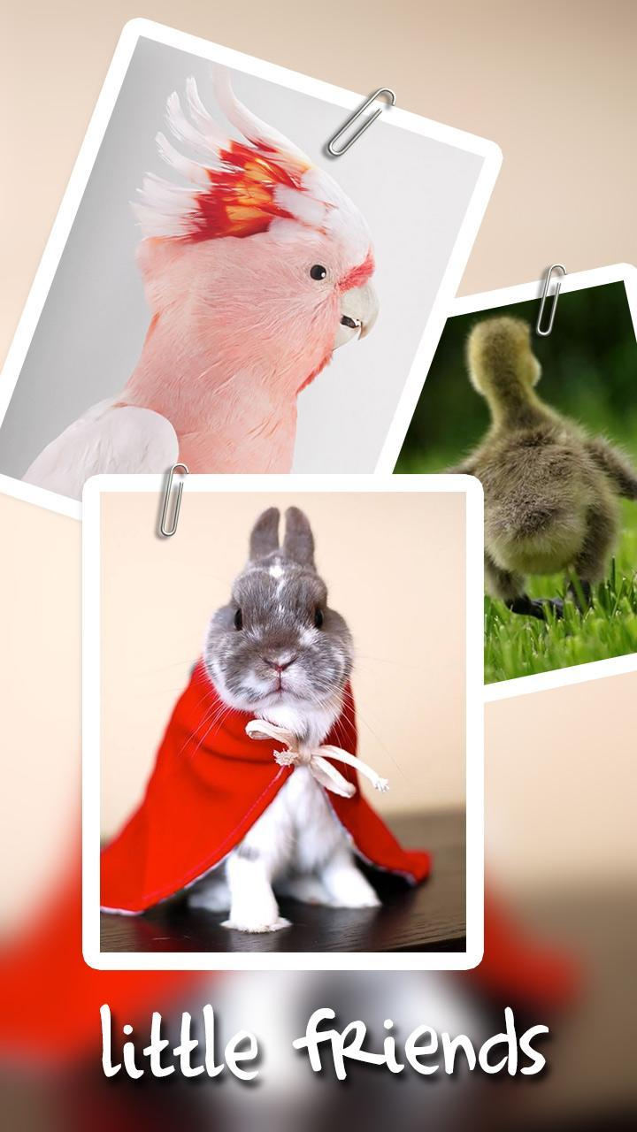 Cute Rabbit Animals Background For Android Apk Download