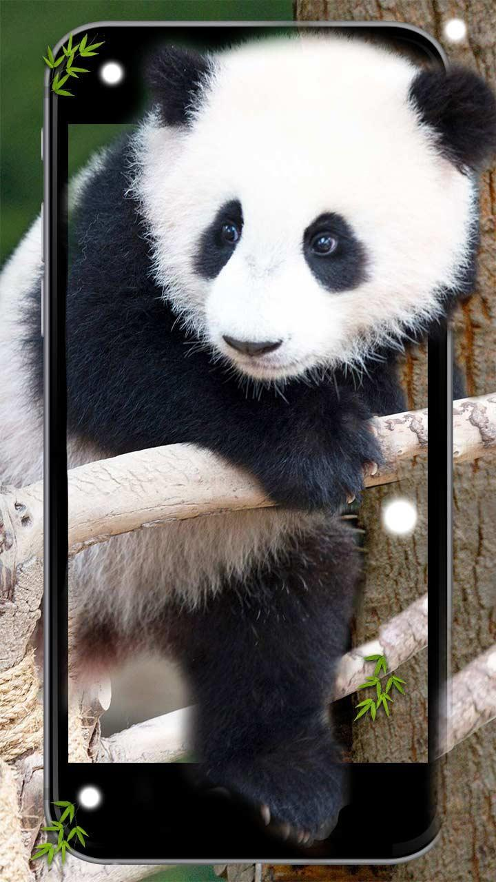 Cute Lazy Panda 3d Cartoon Live Wallpaper For Android Apk