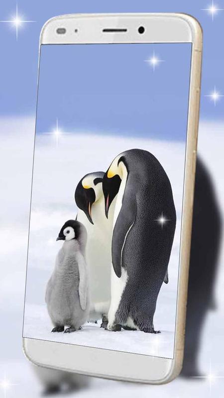 Snow Mini Penguin Live Wallpaper Apk Screenshot