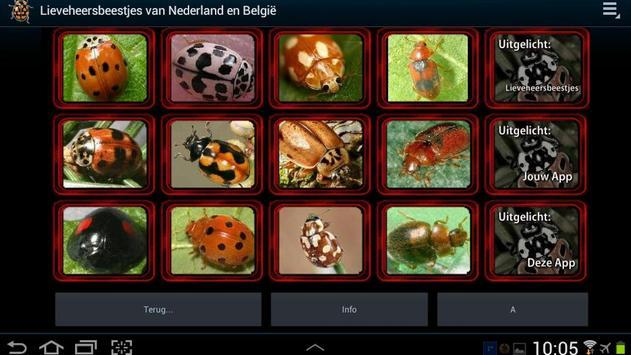 Lieveheersbeestjes in NL en BE poster