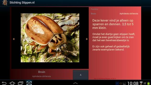 Lieveheersbeestjes in NL en BE screenshot 1
