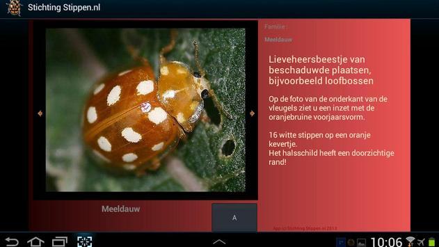 Lieveheersbeestjes in NL en BE screenshot 2