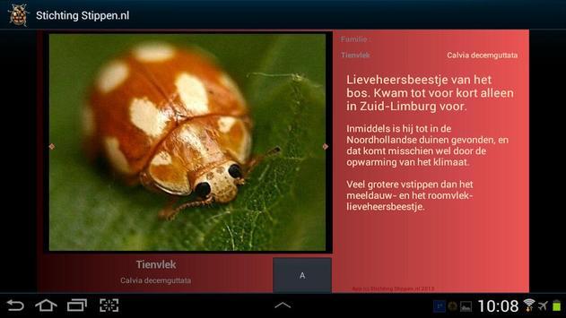 Lieveheersbeestjes in NL en BE screenshot 3
