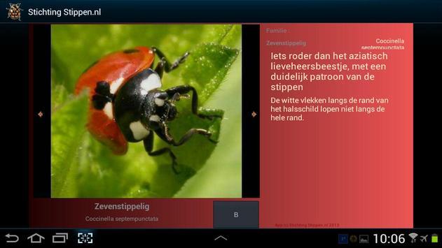 Lieveheersbeestjes in NL en BE screenshot 4