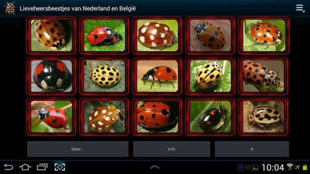 Lieveheersbeestjes in NL en BE screenshot 5