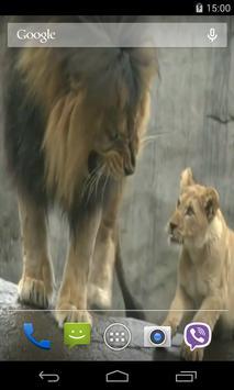 Lion Video Live Wallpaper apk screenshot