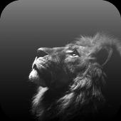 White Lion Video Wallpaper icon
