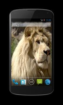 White Lion Video Wallpaper apk screenshot