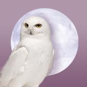Paradelux icon