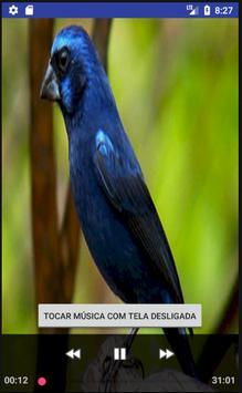 Canto Fêmea Azulão poster