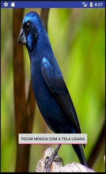 Canto Fêmea Azulão screenshot 1