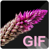 Flowers Live (GIF) Wallpapers icon