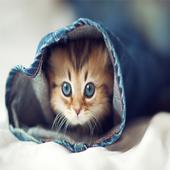 صور قطط جميلة icon