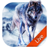 Ice Wolf Live Wallpaper icon