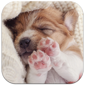 Cute Puppy Dog Live Wallpaper icon