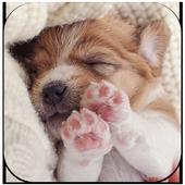 Cute Puppy Dog Live Wallpaper icon