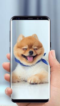 Cute Puppy Dog Live Wallpaper screenshot 1