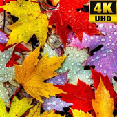 Autumn Wallpapers (HD) icon