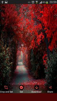 Autumn Wallpapers (HD) apk screenshot