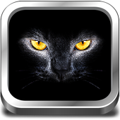 Cats & Kittens Sounds icon