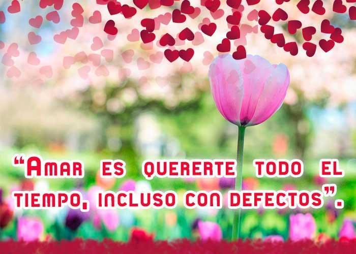 Frases De Amor Con Hermosos Tulipanes для андроид скачать Apk