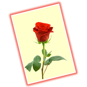 Greeting cards gallery free apk download free social app for greeting cards gallery free apk m4hsunfo