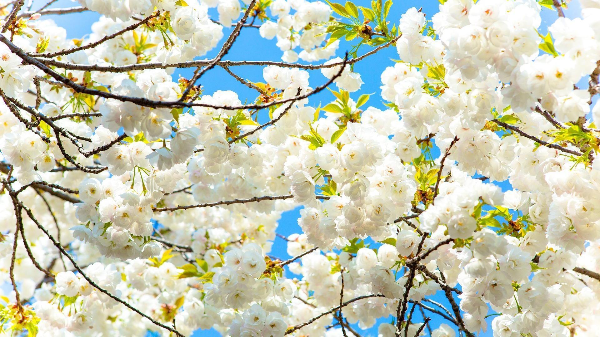 Live Wallpaper Spring Hd 4k Naturaleza Fotos Flor For
