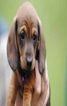 Cute Dachshund Dog Scratchie screenshot 2