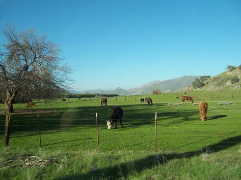 Cattle Ranch Wallpapers - HD screenshot 2