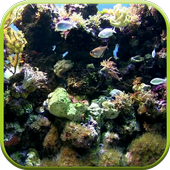 Natural Aquarium Wallpaper icon