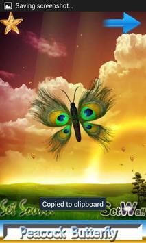 Peacock Butterfly apk screenshot