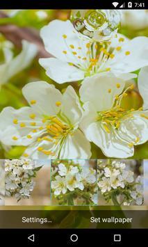 Flowering cherry LiveWallpaper apk screenshot