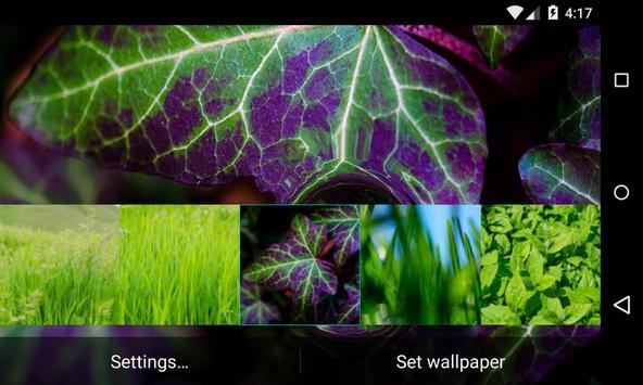 Green Live Wallpaper apk screenshot
