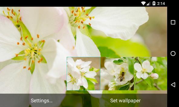 Flowering pear Live Wallpaper screenshot 5