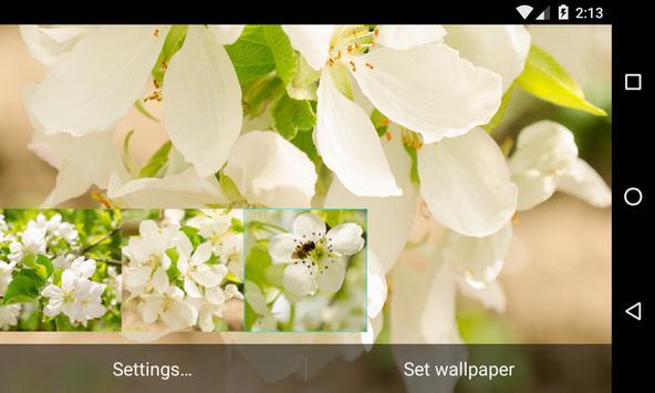 Flowering pear Live Wallpaper screenshot 3