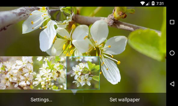 Thorn bush Live Wallpaper apk screenshot