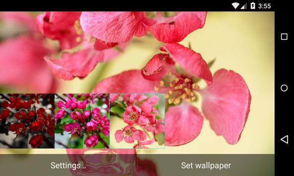 Apple Tree Live Wallpaper apk screenshot