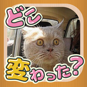 change cats -a-ha!experience- icon