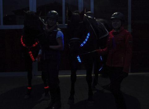 Pferdebeleuchtungen screenshot 14