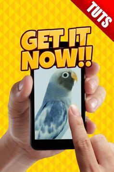Tutorial Perawatan Burung Kicau poster