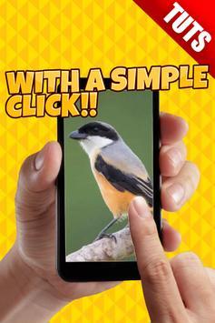 Tutorial Perawatan Burung Kicau apk screenshot