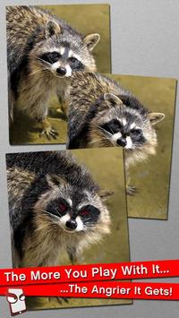 Angry Raccoon Free! poster